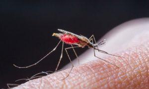 Paludisme: le premier vrai vaccin testé à partir à partir de 2018