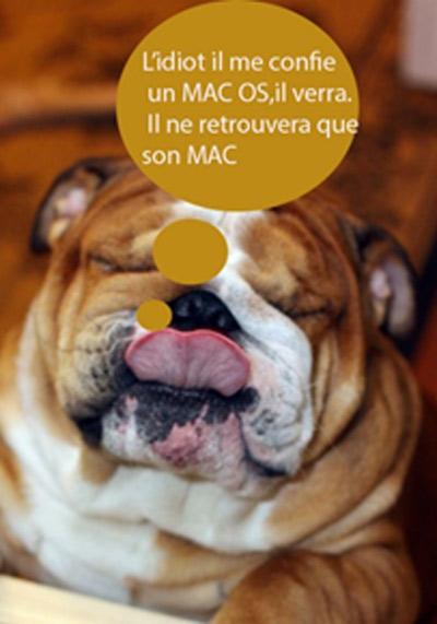 Un chien aime le l'ordi Mac
