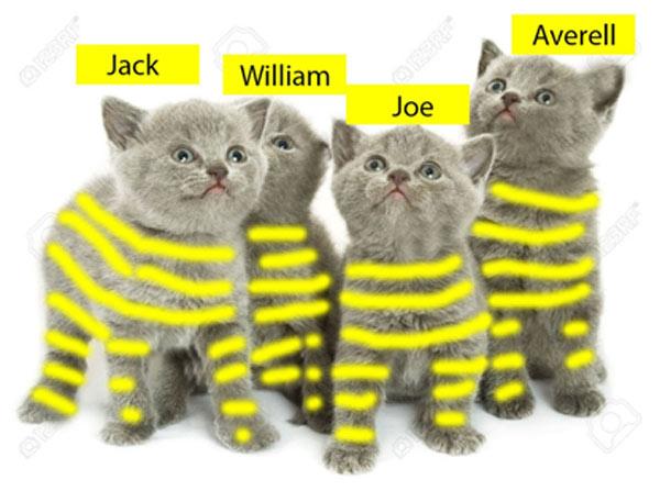 Quatre chaton rayure jaune