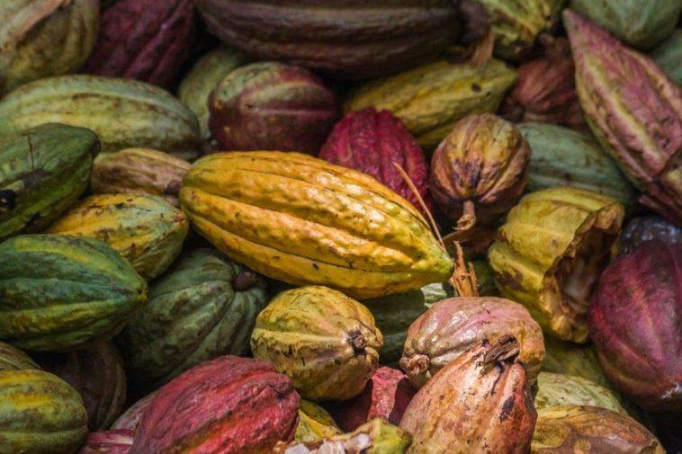Cooperative Cacao ci