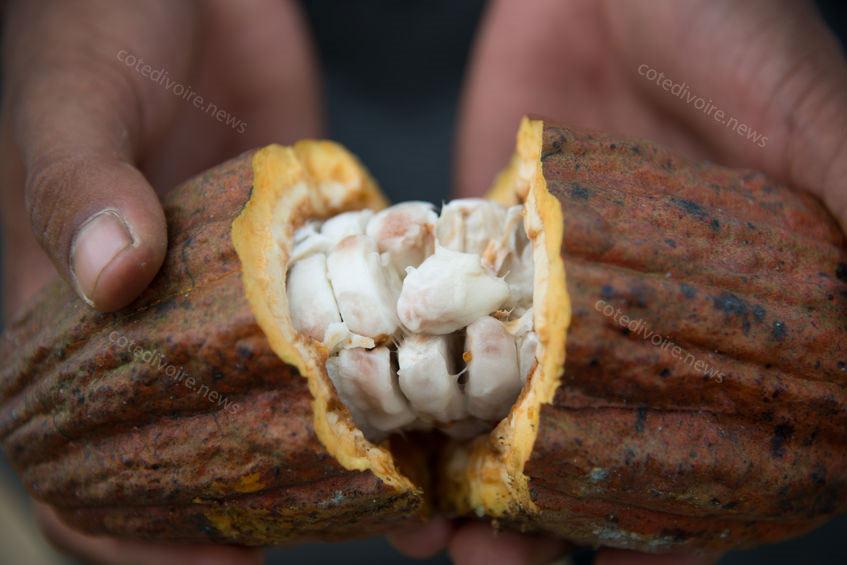 Côte d'ivoire premier pays cacao